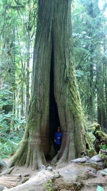 Zdjęcia: MacMillan Provincial Park, Wyspa Vancouver, Drzewko, KANADA