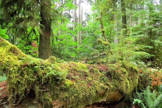 Zdjęcia: MacMillan Provincial Park, Wyspa Vancouver, Park leśny, KANADA