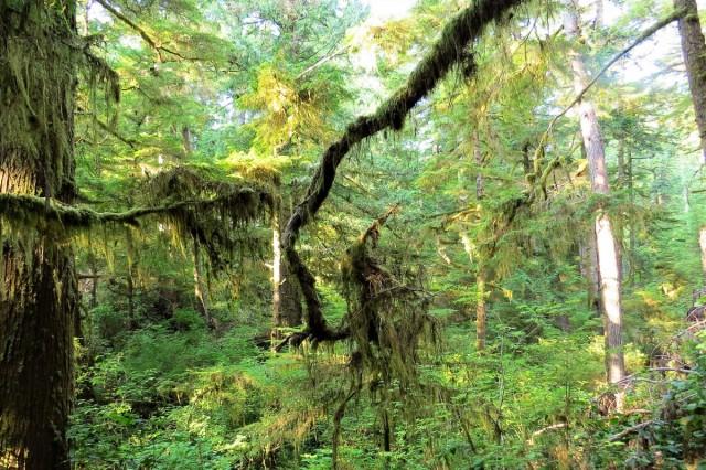 Zdjęcia: Pacific Rim NP, Wyspa Vancouver, Las deszczowy strefy umiarkowanej, KANADA