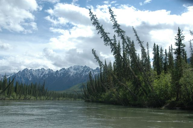 Zdjęcia: Nahanni, NW territories, Świerki nad Nahanni, KANADA