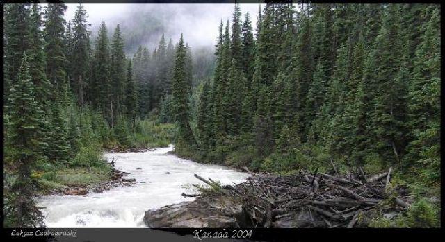 Zdjęcia: Lake of the Hanging Glaciers, Rocky Mountains, Las Elfow, KANADA