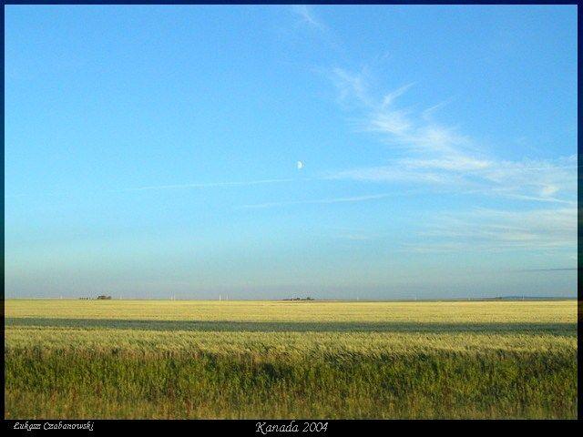 Zdjęcia:  Saskatchewan, Prerie saskatchewan w drodze do Reginy, Zlote prerie, KANADA