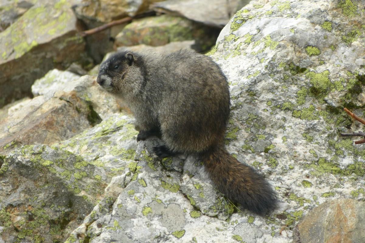 Zdjęcia: Mount Revelstoke NP, BC, A ja nie jestem wiewiórką, KANADA