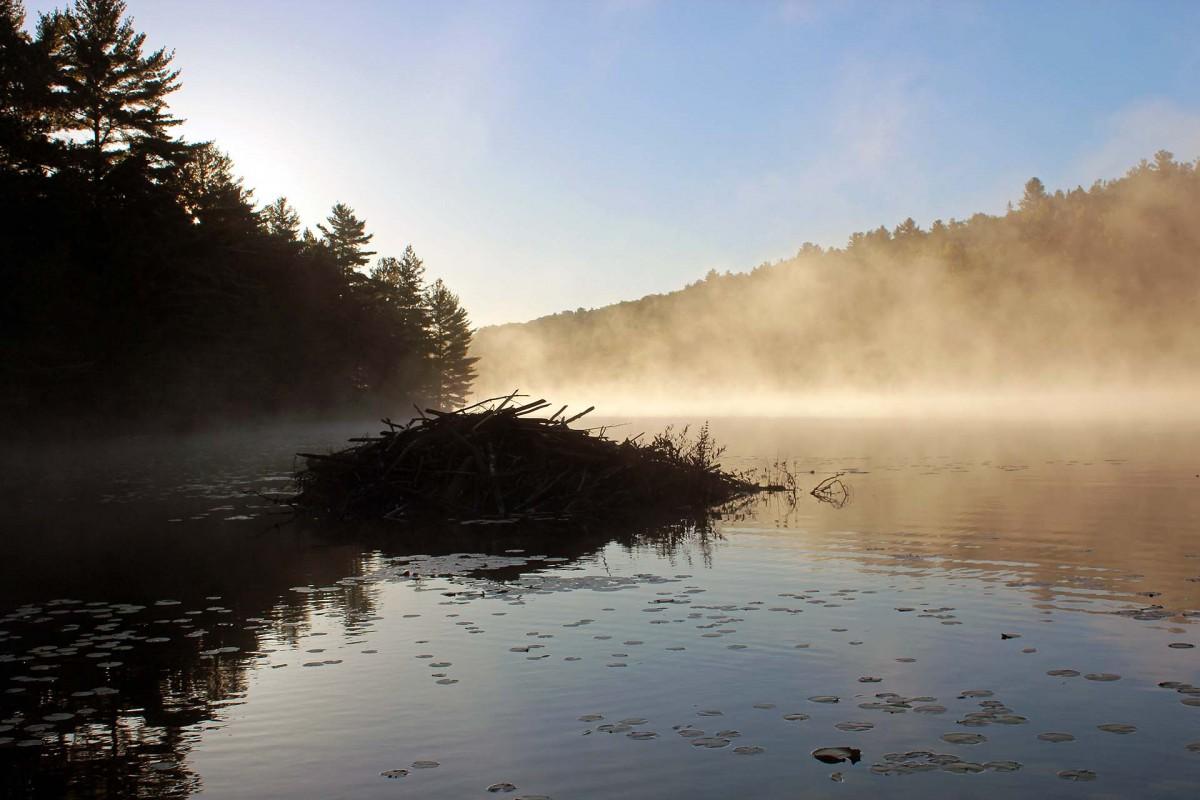 Zdjęcia: Park Restoule, jezioro Hazel Lake, Ontario, Żeremie bobrowe, KANADA