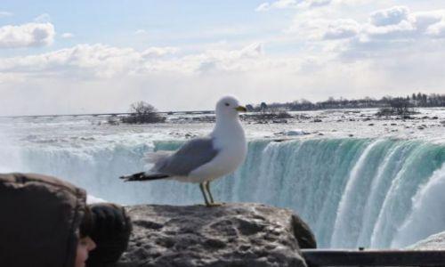 Zdjęcie KANADA / Ontario / Niagara / obserwator.....