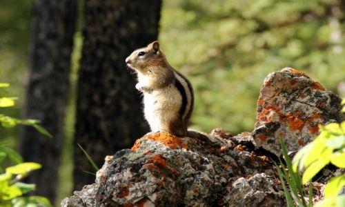 Zdjęcie KANADA / Kolumbia Brytyjska / Banff / wiewiora :)
