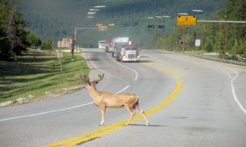 Zdjecie KANADA / Jasper National Park / Jasper / Przystanek Alaska?
