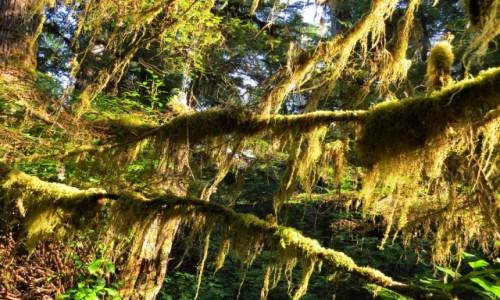 Zdjecie KANADA / Wyspa Vancouver / Pacific Rim NP / Las deszczowy strefy umiarkowanej