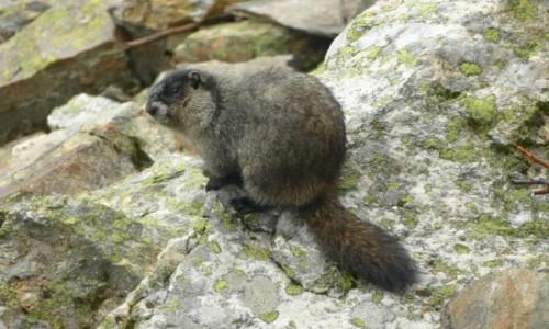 Zdjecie KANADA / BC / Mount Revelstoke NP / A ja nie jestem wiewiórką