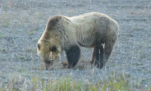 Zdjecie KANADA / Yukon / Kluane NP / Czwarty duży