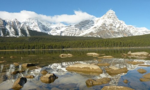 Zdjecie KANADA / Alberta / PN Jasper / Waterfawl