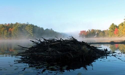 Zdjecie KANADA / Ontario / Park Restoule, jezioro Hazel Lake / Żeremie bobrowe