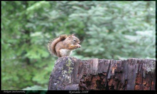 Zdjecie KANADA / Rocky Mountains / Lake of the Hanging Glaciers / Wiewior2