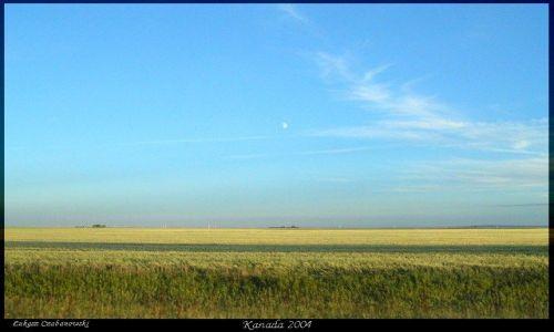 KANADA / Prerie saskatchewan w drodze do Reginy /  Saskatchewan / Zlote prerie
