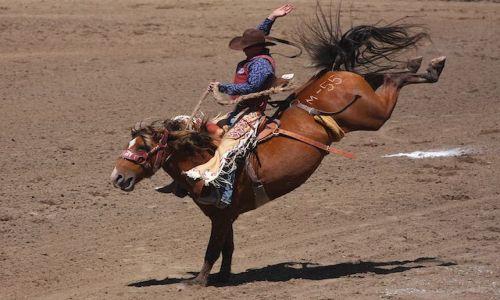 Zdjęcie KANADA / calgary / calgary stampede 2010 / dziki kon