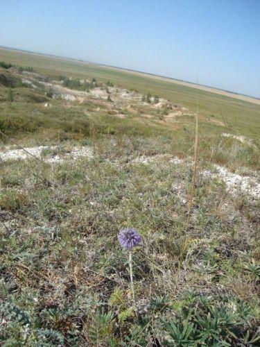 Zdjęcia: Step, Płn.Kazachstan, Ziemia jest jednak okrągła, KAZACHSTAN