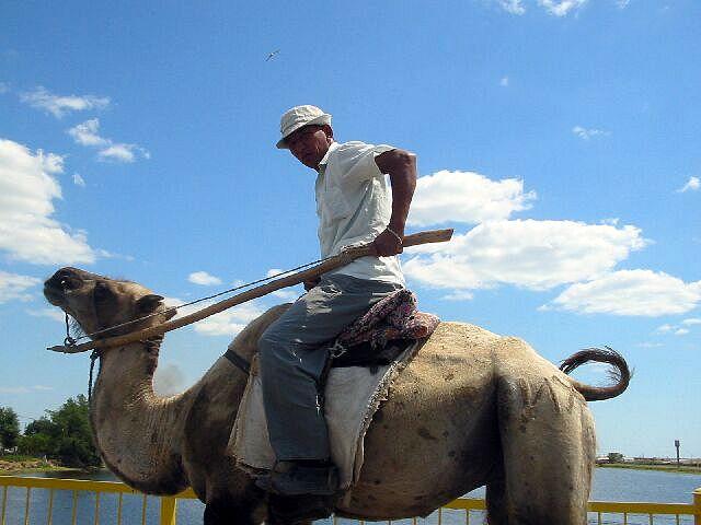 Zdj�cia: Atyrau, Typowy srodek transportu w zachodnik Kazachstanie, KAZACHSTAN