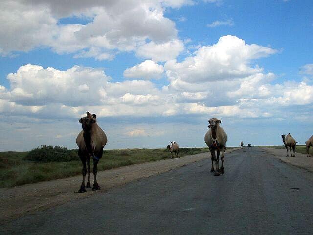 Zdjęcia: Atyrau, Inni uzytkownicy drog, KAZACHSTAN