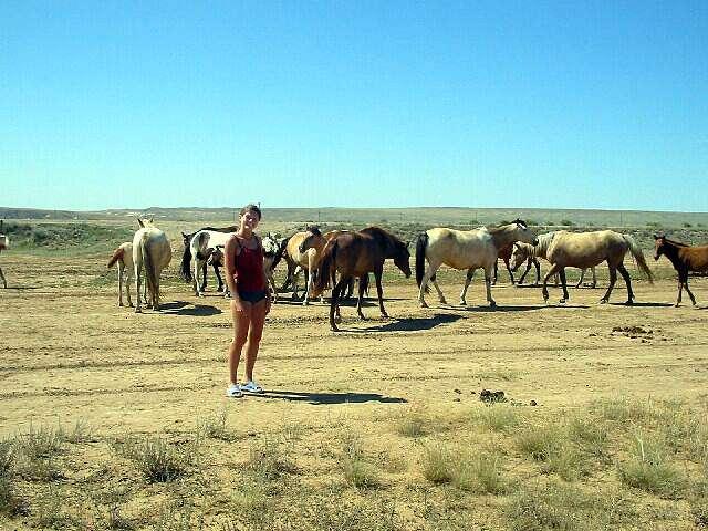 Zdjęcia: Kagandasz, Dzikie konie na stepie, KAZACHSTAN