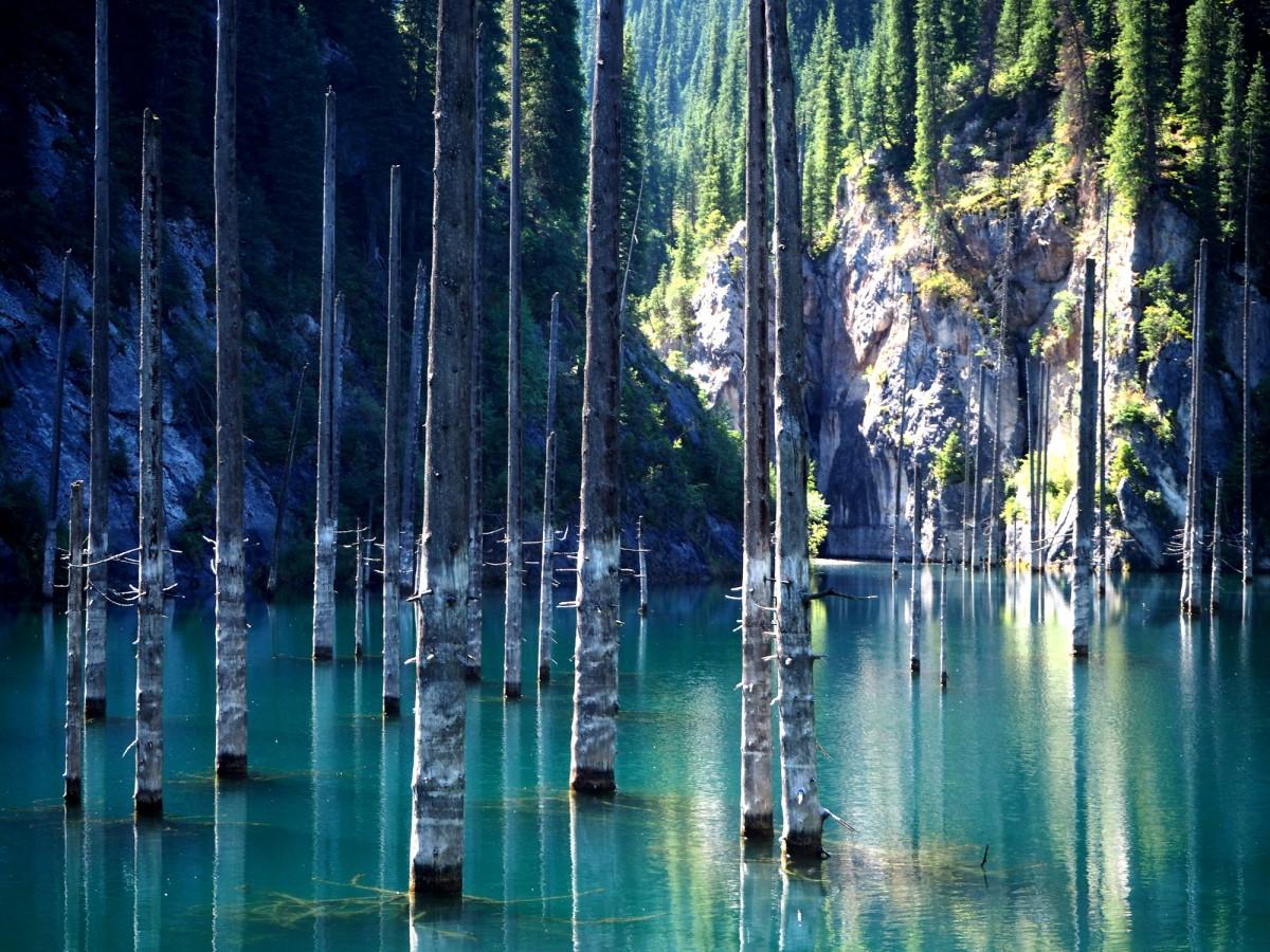 Zdjęcia: Park Narodowy Kolsay Lakes, płd.-wsch. Kazachstan, Zatopiony las, KAZACHSTAN