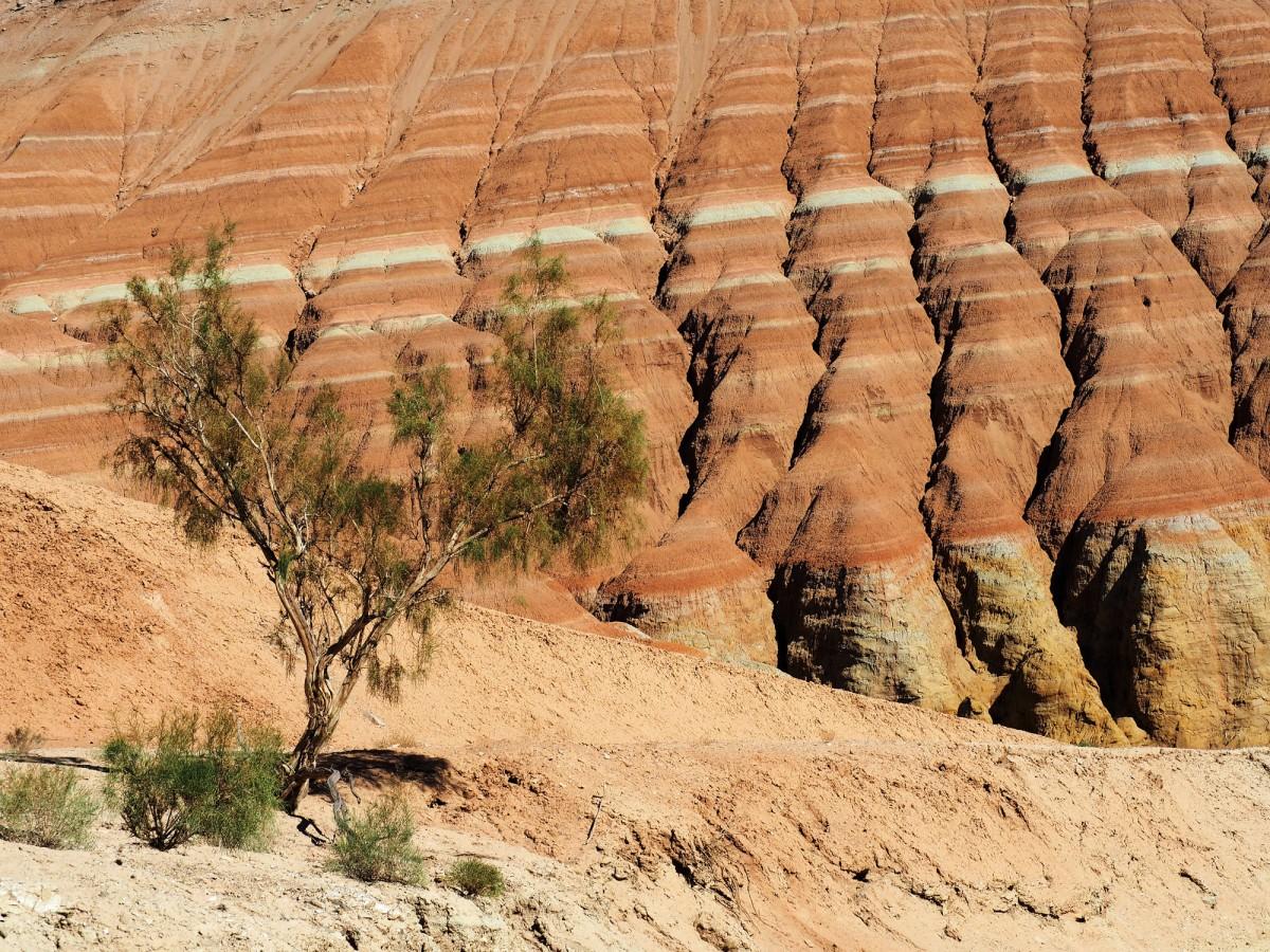 Zdjęcia: Park Narodowy Ałtyn Emel, płd.-wsch. Kazachstan, W kolorowych górach Aktau, KAZACHSTAN