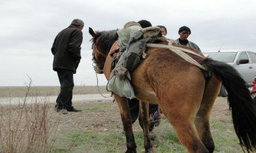Zdjęcie KAZACHSTAN / - / step / owieczka na koniu