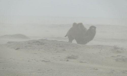 Zdjecie KAZACHSTAN / Kabanbaj / pustynia / Burza piaskowa