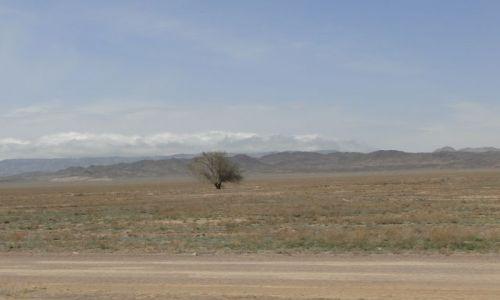 Zdjecie KAZACHSTAN / Poł.Kazachstan / W drodze do Kanionu / Samotne drzewo na stepie