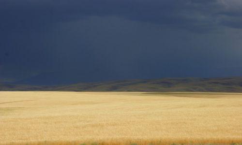 Zdjęcie KAZACHSTAN / Ebro / Ebro / Złote  łany
