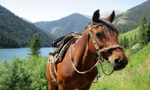 Zdjęcie KAZACHSTAN / Południowy-wschód / Tienszan, jeziora Kolsai / Cichy wspólnik