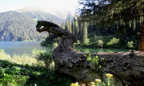 KAZACHSTAN / Południowy-wschód / Tienszan, jeziora Kolsai / Diplodok