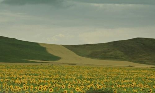 Zdjęcie KAZACHSTAN / ok. Uralska / w drodze... / Jeszcze kwitnące....
