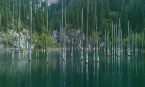 Zdjecie KAZACHSTAN / Południowo-wschodni Kazachstan / Pasmo górskie Küngej Ałatau / Jezioro Kaindy (Kajyngdy)