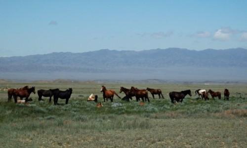 KAZACHSTAN / - / 8 km. od Kanionu Szryńskiego / Mieszkańcy kazachskich stepów