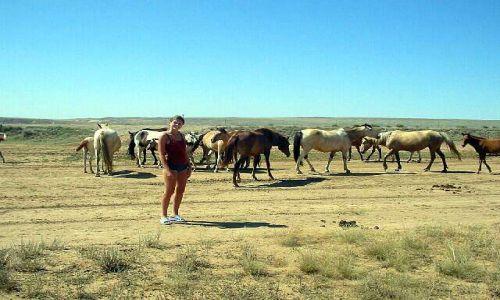 KAZACHSTAN / brak / Kagandasz / Dzikie konie na stepie