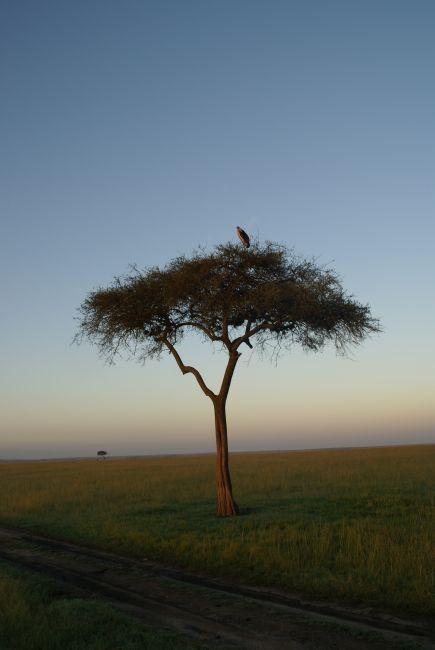 Zdjęcia: Masai Mara, krajobraz po burzy..., KENIA