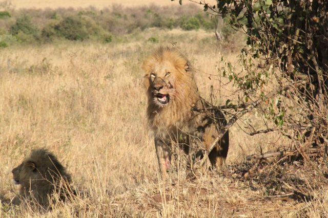 Zdjęcia: Sawanna, Masai Mara, Kenia we wrześniu - 4 parki narodowe, KENIA