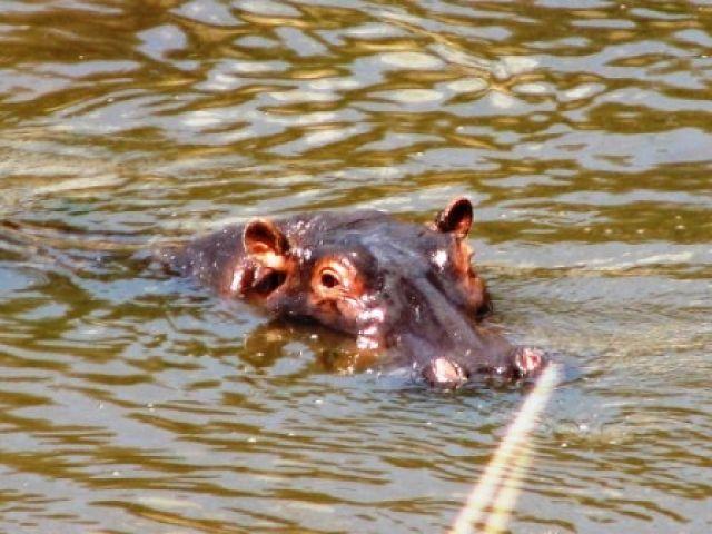 Zdjęcia: lake Boringo, cudowna woda..., KENIA