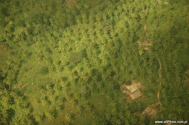 Zdjęcia: Mombasa, Mombasa, Gaje palmowe w okolicach Mombasy, KENIA