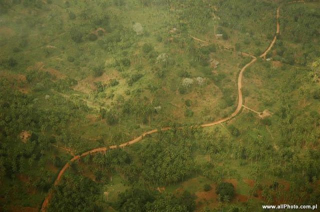 Zdj�cia: Mombasa, Mombasa, Gaje palmowe w okolicach Mombasy, KENIA