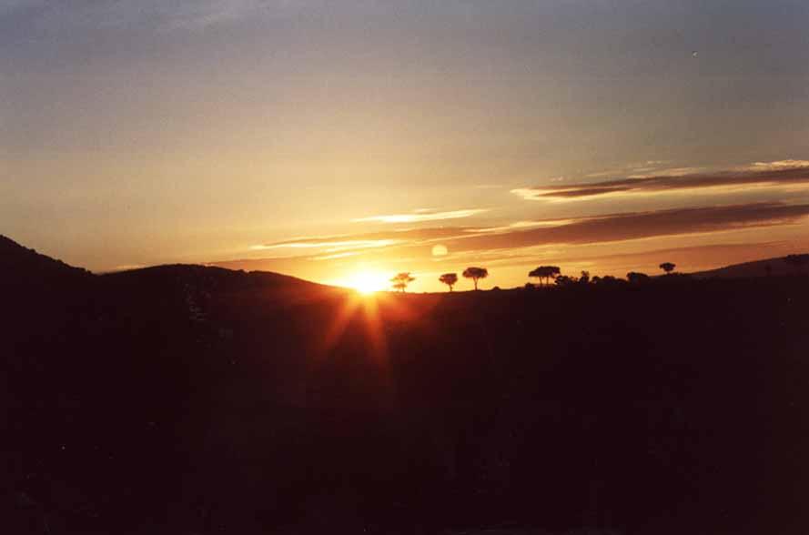Zdjęcia: Sawanna, MASAI MARA, Wschód słońca, KENIA