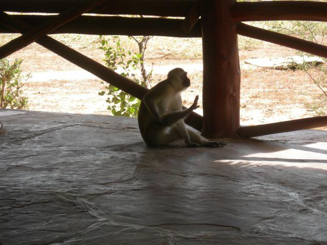 Zdjęcia: Satao Camp, Tsavo East, Luz, KENIA
