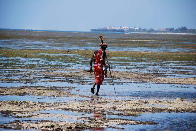 Zdjęcia: Wybrzeże, Wybrzeże, Spacer Masaja podczas odpływu, KENIA