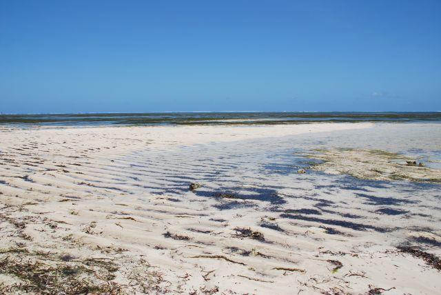 Zdjęcia: okolice Mombasy, Wybrzeże, Plaża po odpływie, KENIA