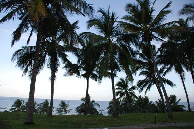 Zdjęcia: Teren przy hotelu Shanzu Palm i Coral Beach, Wybrzeże, Palmy, KENIA