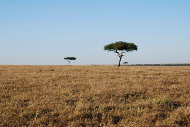 Zdjęcia: SAFARI, Masai Mara, Masai Mara, KENIA