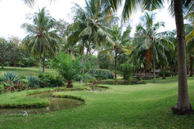 Zdj�cia: Teren przy hotelu Shanzu Palm i Coral Beach, Wybrze�e, WIDOCZEK, KENIA