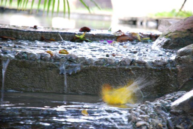 Zdjęcia: Wbrzeże, Okolice Mombasy, Kąpiel, KENIA