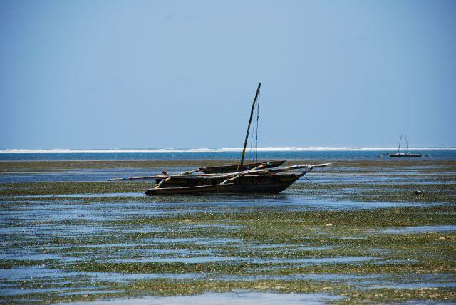 Zdjęcia: Wbrzeże, Okolice Mombasy, Widoczek, KENIA