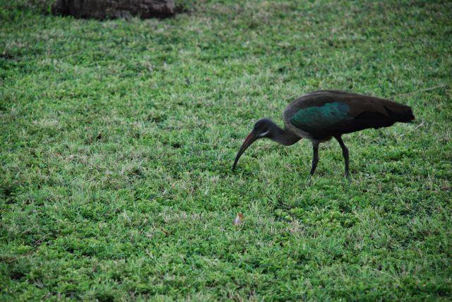 Zdjęcia: Wbrzeże, Wybrzeże, Kto wie co to za ptak???, KENIA